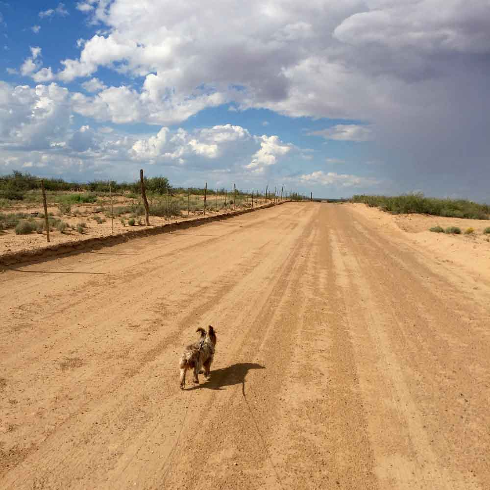 Mojo on a dirt road on the Geronimo Trail National Scenic Byway