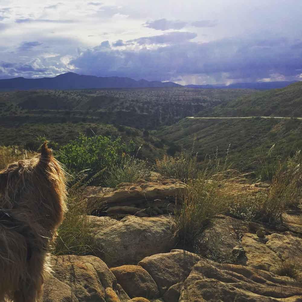 Mojo looks out over the terrain on the Geronimo Trail National Scenic Byway